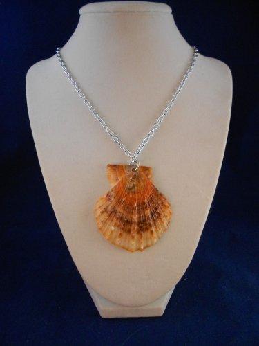 Fashion Jewelry, 22� Scallop Shell Pendant S122, Natural, Different and Unique