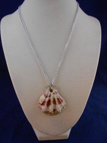 Fashion Jewelry, 16� Scallop Shell Pendant S105, Natural, Different and Unique