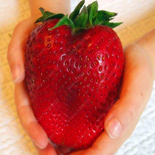 1000pcs Germany super big strawberry seeds, fruit seeds, garden supplies
