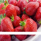 500 Seeds / Pack, Super Giant Strawberry Fruit Seed True Variety free shipping
