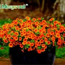 Petunia seeds, Charming Petunia Flower seeds, Petunia potted seed, Bonsai balcony flower 100 pcs/bag