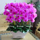 100PCS orchid-seed FLOWER seeds for home garden Phalaenopsis orchid seeds orquidea semente