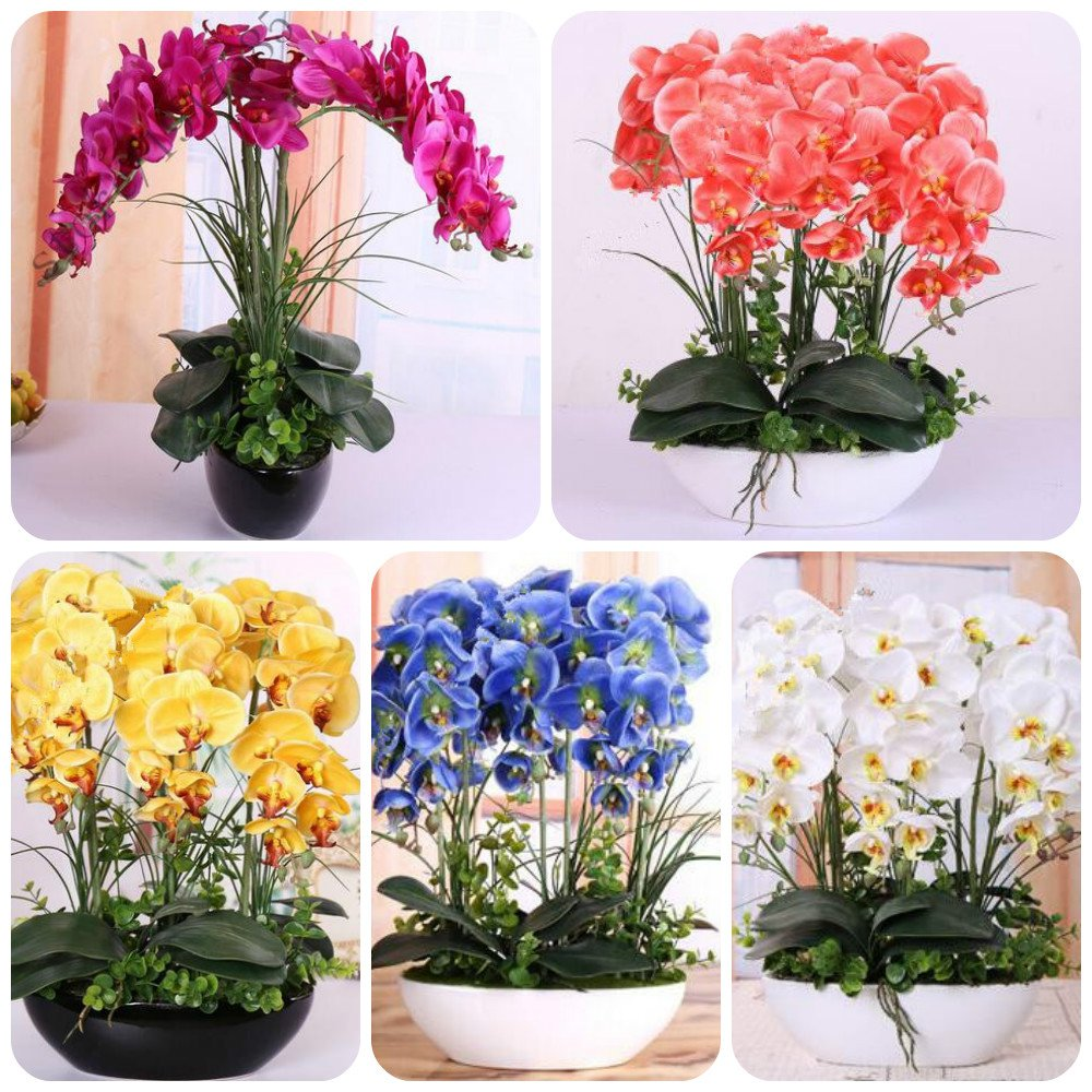 orchid seeds High simulation flower phalaenopsis orchid plants Phalaenopsis Orchids Seeds -100 PCS