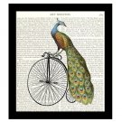 Peacock Art Print, 8 x 10 Decor, Peacock on an Old Fashioned Bicycle, Free US Shipping