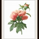 Pink Roses Art Print, 8.5 by 11 Home Decor, Redoute Botanical Art, Free US Shipping