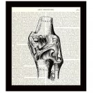 Human Anatomy 8 x 10 Dictionary Art Print Diagram Right Knee Joint Medical Science