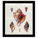 Conch Seashells Dictionary Art Print 8 x 10 Nautical Decor Vintage Book Page