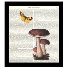 Dictionary Art Print 8 x 10 Mushrooms Butterfly Collage Kitchen Decor Unframed