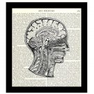 Victorian Medical Science 8 x 10 Dictionary Art Print Human Brain Neck Diagram