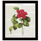 Flower Dictionary Art Print 8 x 10 Red Camellia Rose Vintage Botanical Decor