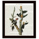 Audubon Dictionary Art Print 8 x 10 Ivory Billed Woodpeckers Birds Vintage Decor