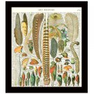 Dictionary Art Print 8 x 10 Colorful Birds Feathers Plumes Collage Home Decor