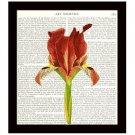 Botanical Dictionary Art Print 8 x 10 Orange Iris Flower Floral Illustration