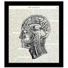 Anatomy 8 x 10 Dictionary Art Print Inside Human Head Victorian Medical Science