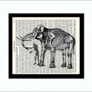 Dictionary Art Print 8 x 10 Human and Elephant Skeletons Anatomy Medical Science