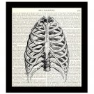 Human Sternum 8 x 10 Dictionary Art Print Rib Cage Bones Anatomy Medical Science