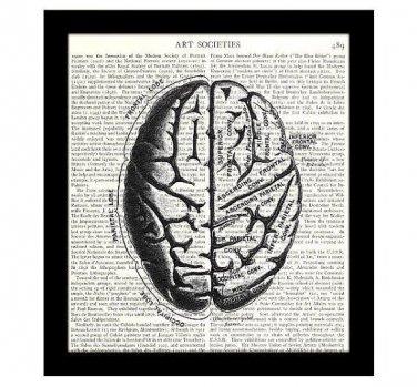 Brain 8 x 10 Dictionary Art Print Human Anatomy Medical Science Book Page