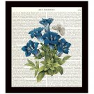 Botanical Dictionary Art Print 8x10 Colorful Redoute Gentian Floral Blue Flowers