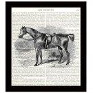Horse Dictionary Art Print 8 x 10 Calvary Vintage Equestrian Home Decor