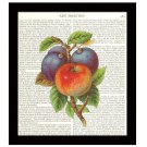 Dictionary Art Print 8 x 10 Kitchen Art Apple Plums Home Decor Housewarming Gift