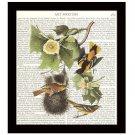 Audubon Dictionary Art Print 8 x 10 Northern Orioles Vintage Birds Wildlife Decor