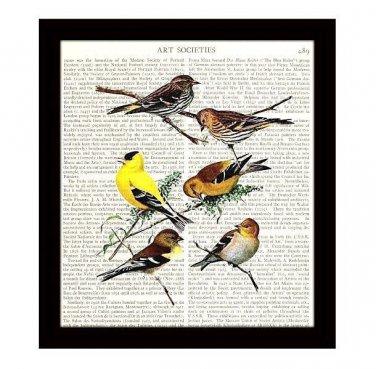 Birds Dictionary Art Print 8 x 10 Finches Songbirds Garden Vintage Home Decor