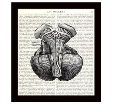 Human Brain Dictionary Art Print 8 x 10 Medulla Oblongata Victorian Illustration