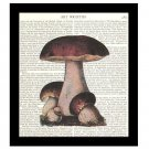 Dictionary Art Print 8 x 10 Cluster of Mushrooms Vintage Kitchen Decor Unframed