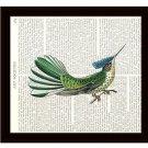 Dictionary Art Print 8 x 10 Colorful Hummingbird Wildlife Nature Home Decor