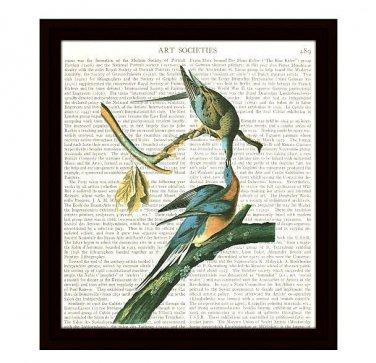 Audubon Dictionary Art Print 8 x 10 Carrier Pigeons Vintage Birds Home Decor