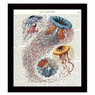 Jellyfish 8 x 10 Dictionary Art Print Nautical Home Decor Beach Ocean Sea Life