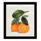 Oranges Dictionary Art Print 8 x 10 Vintage Botanical Kitchen Home Decor Fruit