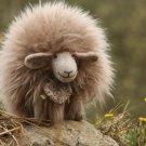 BENANDLU - Sheep like shearling gingerbread almond