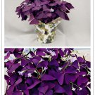 Purple Shamrock- Oxalis triangularis Bulbs * Easy Grow * Perennial * *SHIPPING FROM US* CombSH B24