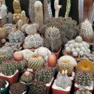 Cactus mix 20 seeds ( Approximate ) *Easy grow * Care free * *SHIPPING FROM US* CombSH C21