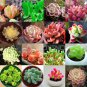 Echeveria species mix 10�50�100 seeds *succulent cactus* rare exotic *SHIPPING FROM US* CombSH C14