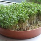 Curled Cress 1000 seeds Babarea Vernapraecox * ez grow * *SHIPPING FROM US* CombSH E14