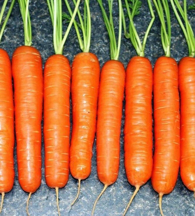 Scarlet Nantes Carrot 1500 seeds * NON GMO * ez grow * *SHIPPING FROM US* CombSH I21