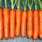 Scarlet Nantes Carrot 1500 seeds * NON GMO * ez grow * *SHIPPING FROM US* CombSH I21