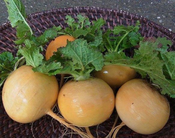 Golden ball turnip 1000 seeds * NON GMO * ez grow * *SHIPPING FROM US* CombSH E27
