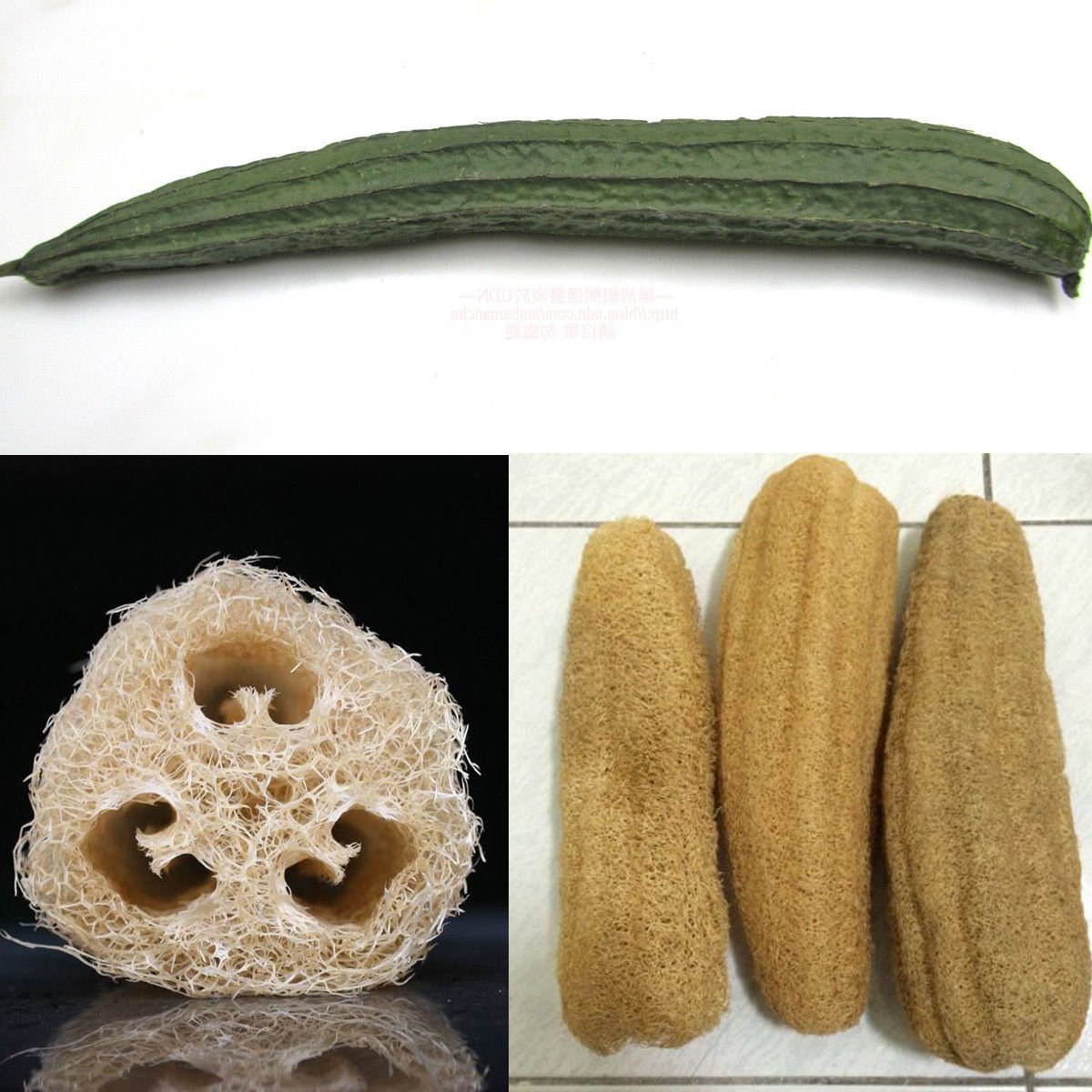 Luffa Gourd / Sponge Gourd 25 seeds *Heirloom*Non GMO* Natural Sponge *SHIPPING FROM US* CombSH H34