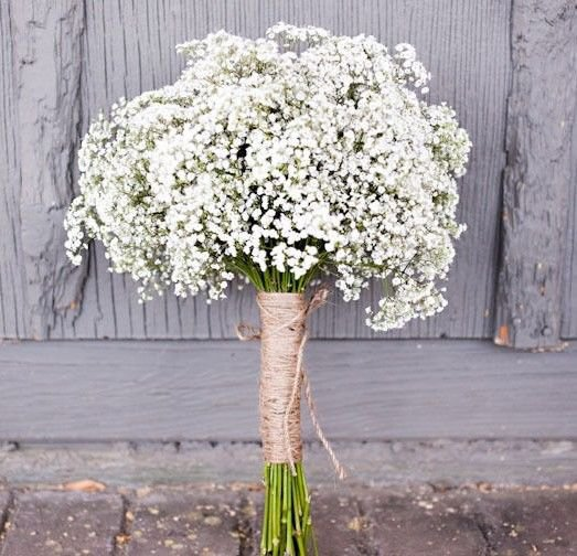 Baby's breath Gypsophila elegans 1000 seeds *Cut flower * Fast Easy Grow *SHIPPING FROM US* CombSH