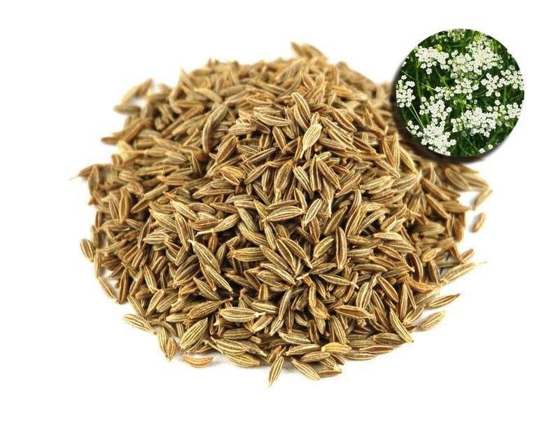 Cumin 500 seeds Cuminum Cyminum * Grow your own herb * ez grow * E51
