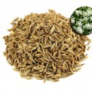 Cumin 500 seeds Cuminum Cyminum * Grow your own herb * ez grow * E51