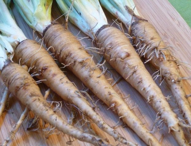 Mammoth sandwich island salsify 50 seeds * Non GMO* Oyster Plant E76