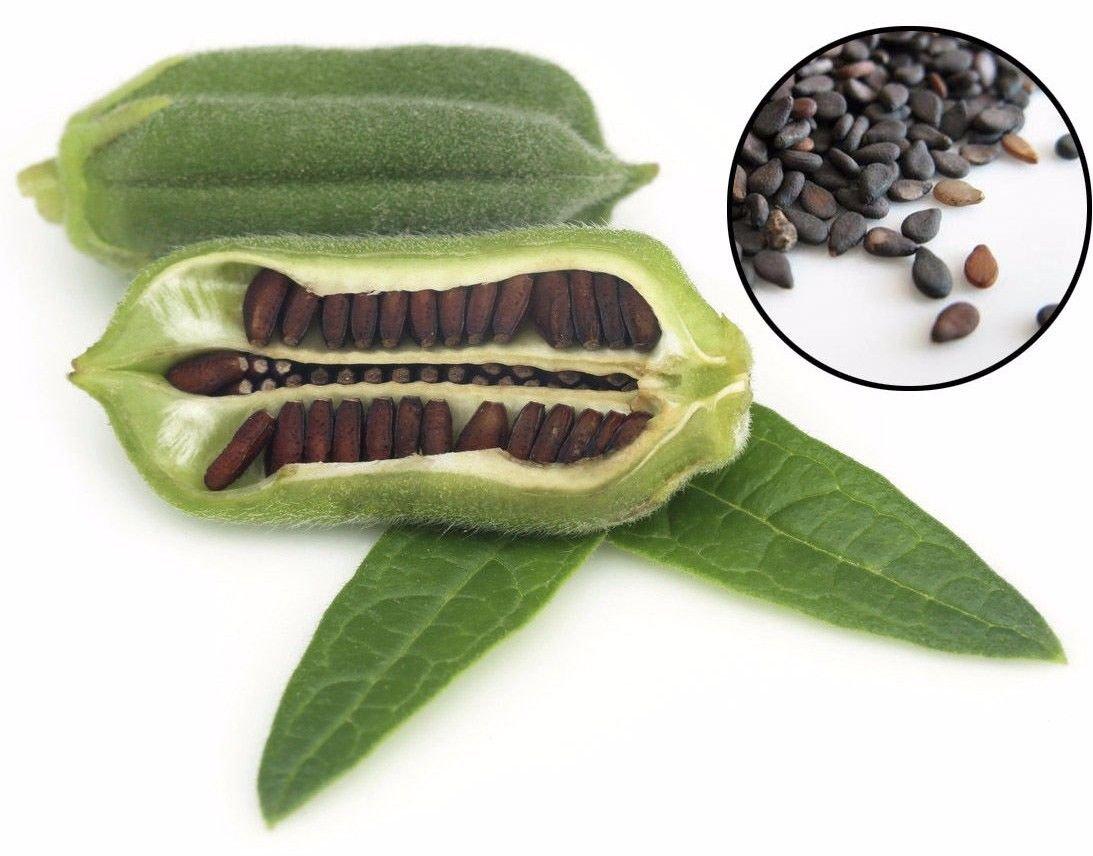 Black Sesame 1500 seeds  Sesamum indicum * Cuisine * *SHIPPING FROM US* CombSH I26