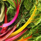 Rainbow Swiss Chard 150 seeds * Edible * Ornamental * Non GMO* Heirloom * *SHIPPING FROM US* CombSH