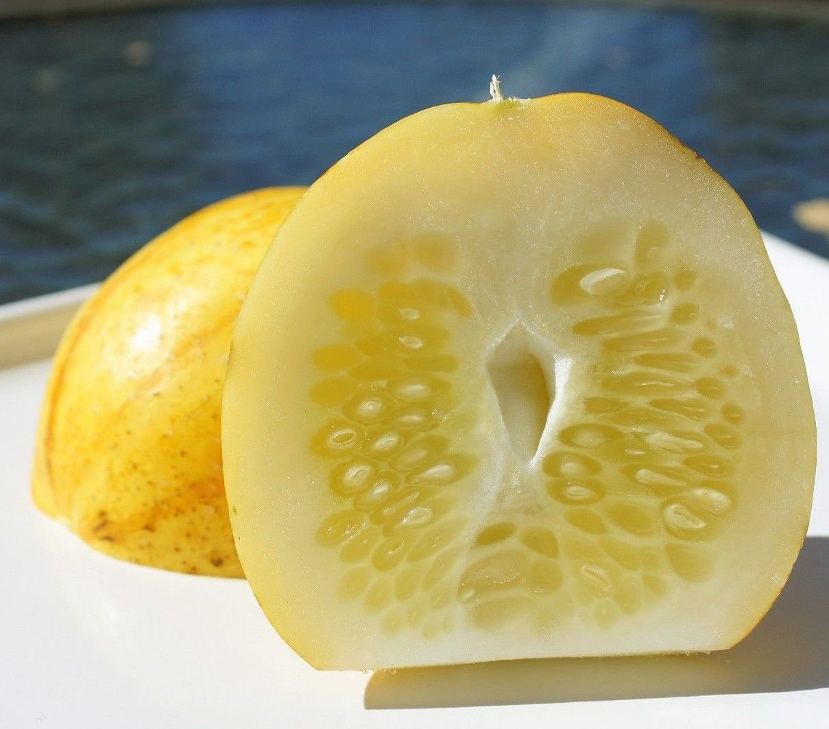 Lemon Cucumber 50 seeds * Very productive* Heirloom * Non GMO * Unusual * *SHIPPING FROM US* CombSH