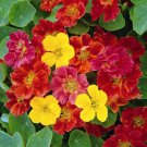 Nasturtium Jewel Mix 25 seeds * Fast & easy grow *Edible* Ornamental *SHIPPING FROM US* CombSH C16