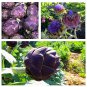 Artichoke Purple Romagna 25 seeds * Cynara scolymus* Non GMO* EZ grow *SHIPPING FROM US* CombSH I32